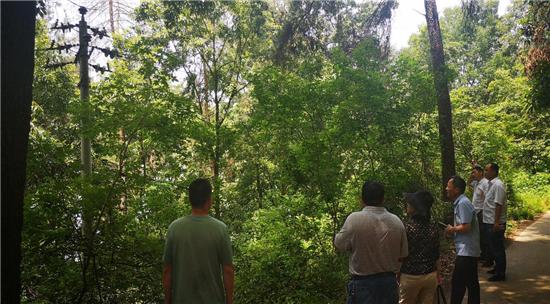 驻马店市林业局组织审前联合踏查  确保林木采伐审批精准高效